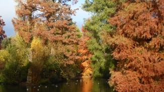 automne-P1230230.jpg
